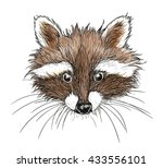hand drawn raccoon | Shutterstock .eps vector #433556101