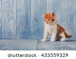 Stock photo funny kitten ginger kitten with white chest long haired red orange kitten sweet adorable kitten 433559329