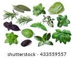 set of spicy herbs. separate... | Shutterstock . vector #433559557
