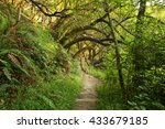 Wooded Forest Trail With Lush...