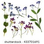 oil paint dry fall green spring ...   Shutterstock . vector #433701691