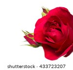 Stock photo red rose on a white background 433723207