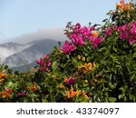 Mountains And Bougainvillea In...
