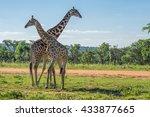 Giraffe Teaching Her Offspring...