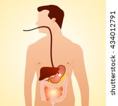 gastrointestinal tract in... | Shutterstock .eps vector #434012791