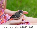 Chick Bird In The Hand At The...