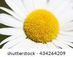macro chamomile