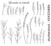 lavender flowers  triticale... | Shutterstock .eps vector #434324884