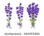 bouquet of lavender flowers | Shutterstock .eps vector #434355304