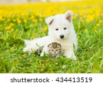 Cute Puppy Embracing Tabby...