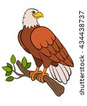 Cartoon Birds For Kids  Eagle....