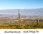 ������, ������: Landscape with cacti near