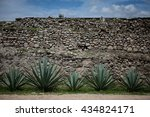 Maguey Plants With Stone Wall
