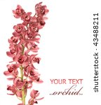 Beautiful  Orchid Isolated On...
