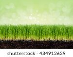 wheatgrass plant roots and soil ... | Shutterstock . vector #434912629