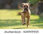 A Happy Puppy Running Straight...