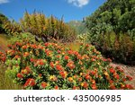 colorful flowers in the... | Shutterstock . vector #435006985