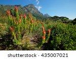 kirstenbosch botanical gardens... | Shutterstock . vector #435007021