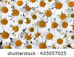 chamomile flowers background  | Shutterstock . vector #435057025