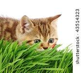cat hunter - stock photo