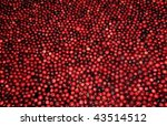 Harvest Of Cranberries Floatin...