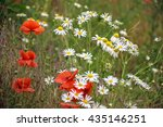 poppy and daisy flowers background - stock photo