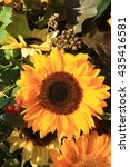 A Bright Yellow Sunflower And...