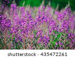 willow herb meadow chamerion... | Shutterstock . vector #435472261