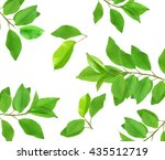 set of tree branches with fresh ... | Shutterstock . vector #435512719