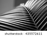 black and white close up view... | Shutterstock . vector #435572611