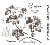 winemaking 2. hand drawn...