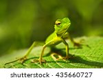 beautiful animal in the nature... | Shutterstock . vector #435660727