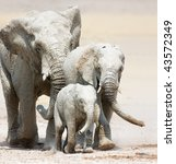 Small Elephant Family Full Of...
