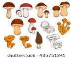vegetarian edible brown cap... | Shutterstock .eps vector #435751345