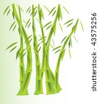 green bamboo on white and green ... | Shutterstock . vector #43575256