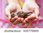 Woman Holding A Dead Bird In...
