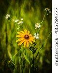 flowers | Shutterstock . vector #435784777