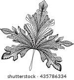doodle textured leaf background.... | Shutterstock .eps vector #435786334