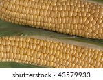 Closeup of two corns on the cob. - stock photo
