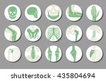 orthopedic and spine vector... | Shutterstock .eps vector #435804694