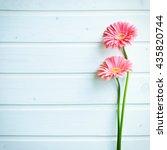 pink gerber daisy flowers on ... | Shutterstock . vector #435820744