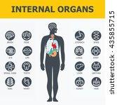 internal organs set. medical... | Shutterstock .eps vector #435855715