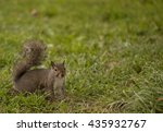 Lovely Eastern Fox Squirrel...
