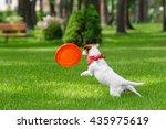 Dog Catching Frisbee. Jack...