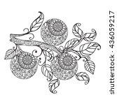vector citrus fruit orange food.... | Shutterstock .eps vector #436059217