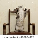 Cat Dancing On A Chair  Funny...