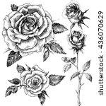 flowers set. hand drawn rose... | Shutterstock .eps vector #436070629