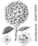 hydrangea flower set. hand... | Shutterstock .eps vector #436073059