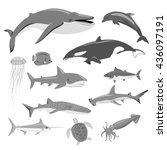 marine fauna set of aquatic... | Shutterstock . vector #436097191