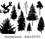 silhouette of different pine... | Shutterstock . vector #436125757